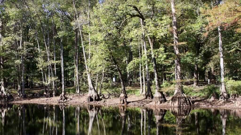 Aliceville Lake