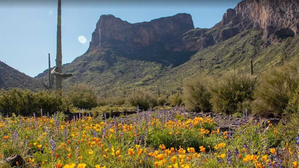 Picacho Peak is one of the top state parks in Arizona